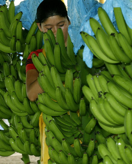 Costa Rica Banana Industry Partners Up With Science