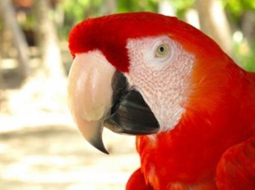 Costa Rica's Peaceful tradition extends to the protection of its animals with a hunting ban