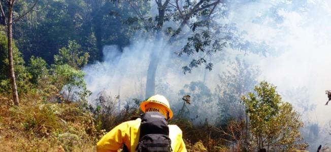Incendios-Forestales-652x300