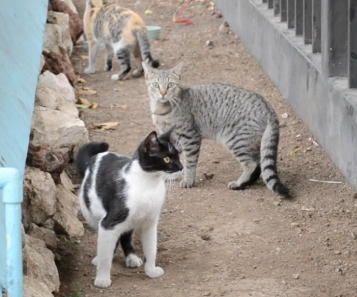 Cats Overrun Costa Rica's Legislature