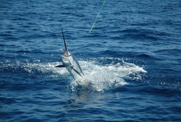 Costa-Fishing-740x500
