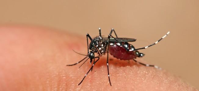 Dengue_3-652x300