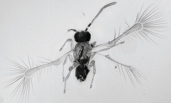 Ultra-small-Insects-Discovered2