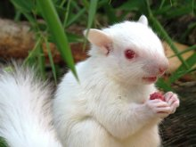albino_squirrel_zoo-ave-facebook