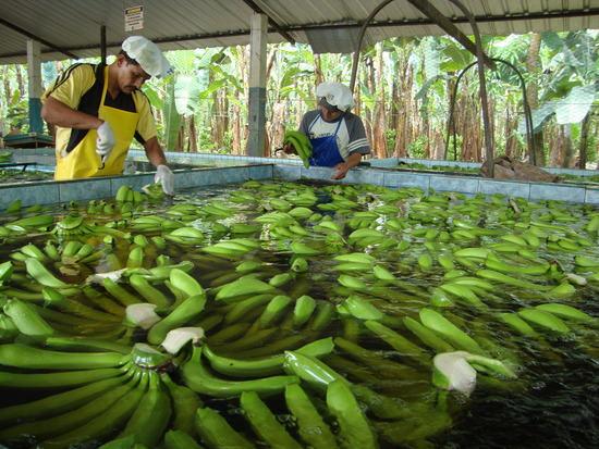 banana-wash