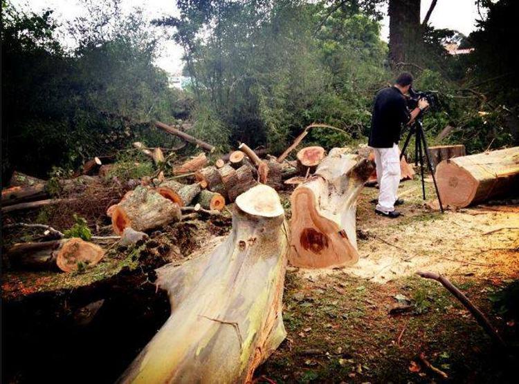 cutting-down-trees-montes-de-oca