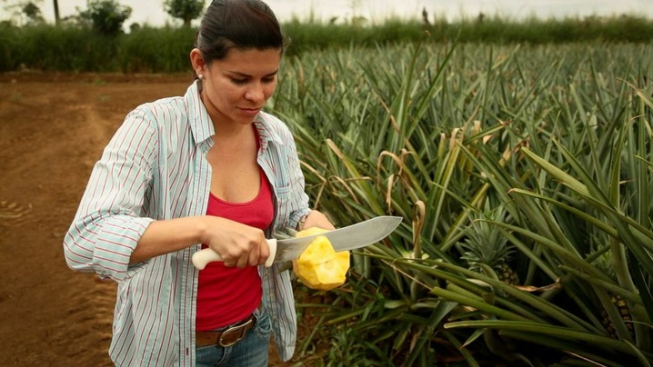 Jennifer Monge manages the B Jimenez farm in northern Costa Rica. She says keeping half the land in forest provides a natural pest barrier as well as creates a cooler microclimate which protects the pineapples from heat waves and drought.