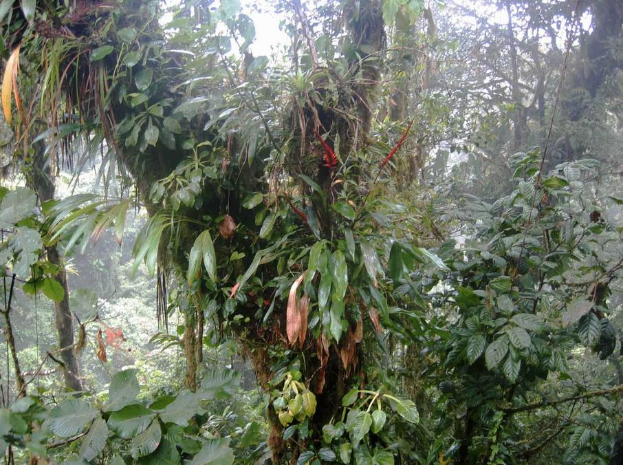Photo courtesy: Costa Rican Vacations