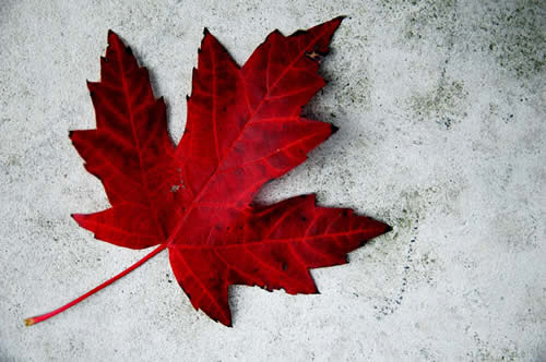 Happy Canada Day To All Our Canadian Visitors and Friends!
