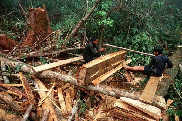 100952357-timber.600x400
