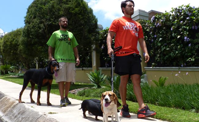 Dog Walker Takes Dogs For  Walk!
