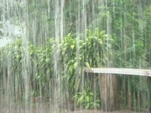 rain-main