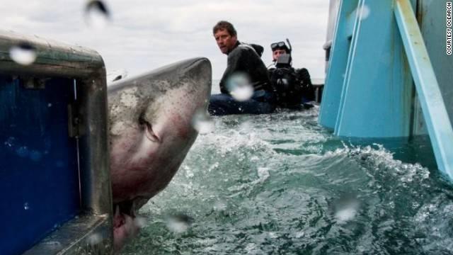 Costa Rica's Shark Whisperer