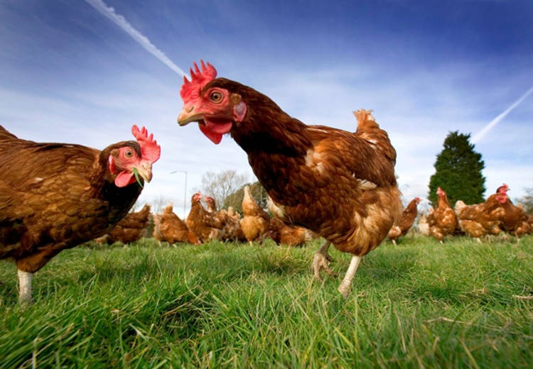 World Egg Day Highlights Growing Popularity of Cage-free Eggs