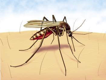 Guanacaste Woman First Death From Dengue This Year