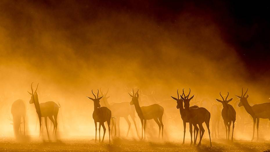 Foto Of The Day: Lee Bothma's Antelopes in a Misty Sunset