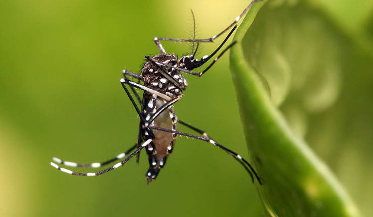 Costa Rica Issues Health Alert Against CHIKV Virus