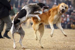 dog-fightinkl