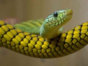 serpiente-e1387584038544