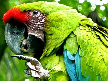 costaricaafpgetty