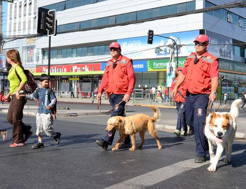 Chile: From stray dogs to guards