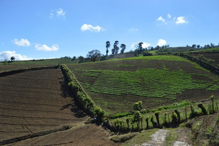 Farmers in Pacaya cultivate crops on a slant across the slope so that rains will not wash away their soil. In this micro-basin, 68 percent of the fields have a slope of more than 30 percent. Credit: Diego Argueda Ortiz/IPS