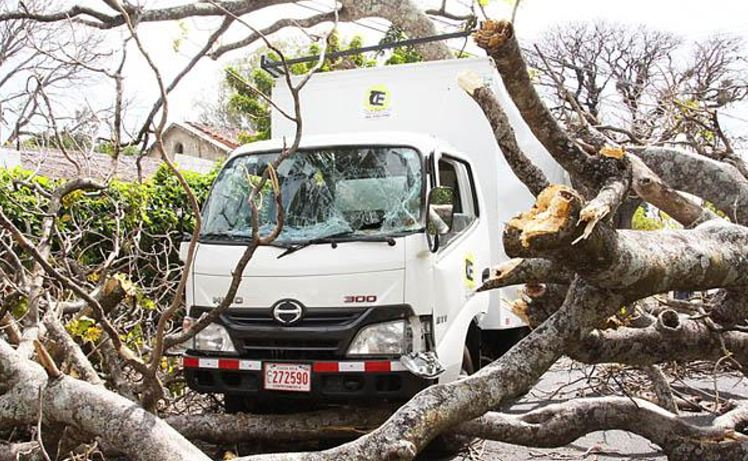 70 year old tree in Santa Ana falls on two light trucks Wednesday afternoon, caused by strong winds of up 90 km/h. Foto: Diario Extra