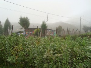 The home of a poor farming family in the mountains of Cajamarca, in the central Colombian department of Tolima. Credit: Helda Martínez/IPS