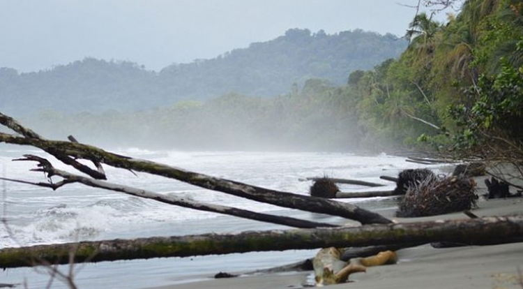 Waves and high tides are eating away at the beaches in Costa Rica's Cahuita National Park, where the vegetation is uprooted and washed into the sea. Credit: Diego Arguedas/IPS