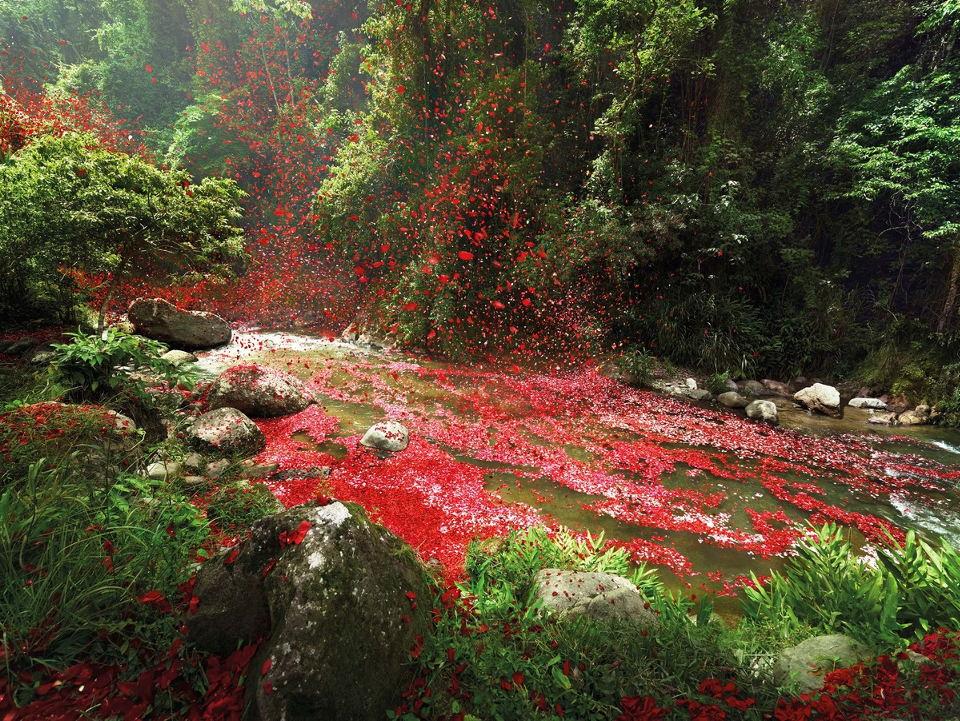 mcmann-flowers-pedals-costarica0303