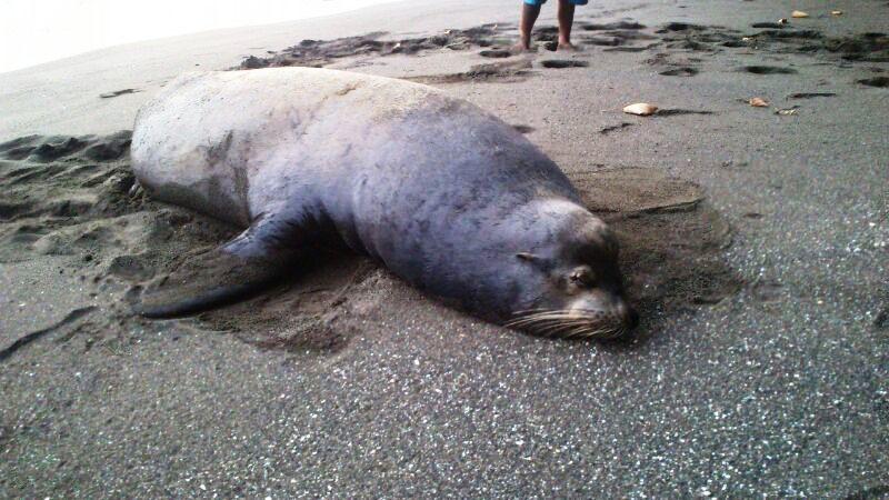 Animal-hora-playa_LNCIMA20140521_0071_1