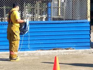 El animal fue controlado por los bomberos de Ciudad Neily, Corredores, con ayuda del personal de mantenimiento del hospital. Fue trasladado hasta el río Corredores, para ser liberado. | FREDDY PARRALES.