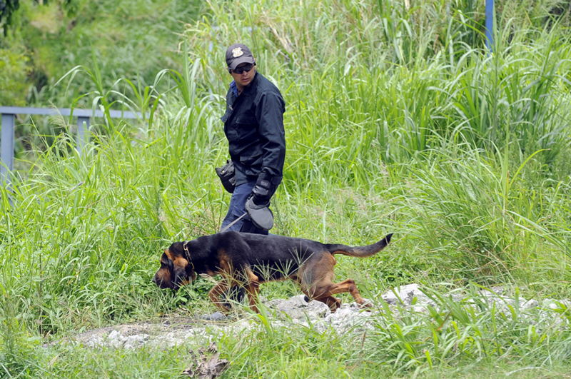 Police dogs are being used in the search for the missing six year old girl.
