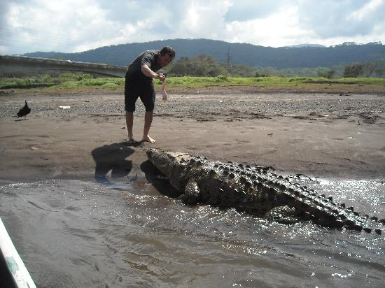 Feeding the croc, by the Tarcoles River. Costa Rica. | Phoeo Jose's Crocodile River Tour.