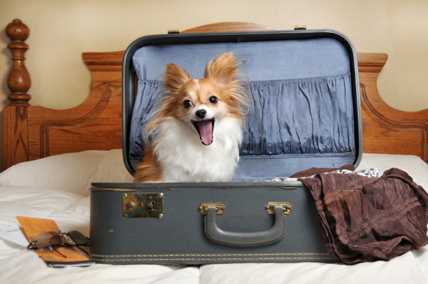 dog-ready-for-vacation