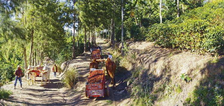 Espiritu-Nacion-cafetalera-Costa-Rica