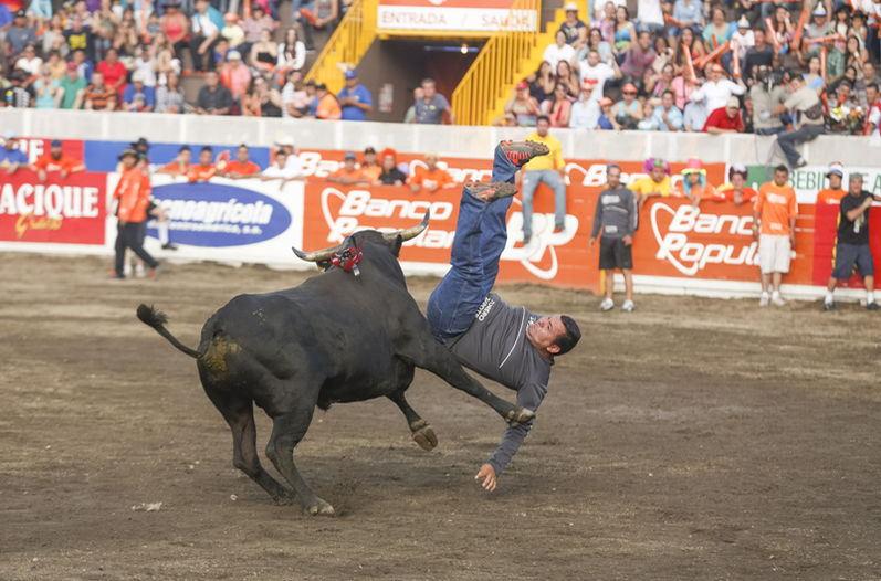 Bullfights are a major attraction at Costa Rica festivals. Photo La Nacion