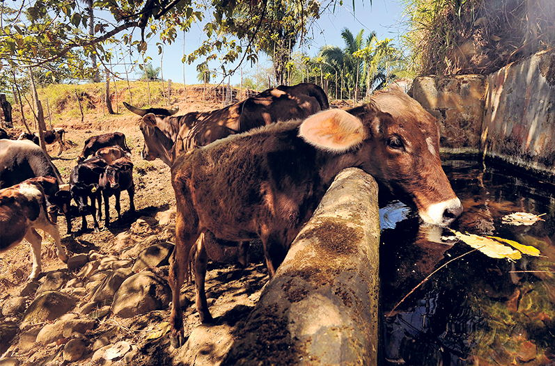 Agriculture and livestock are expected affected by the drought in the North and Central Pacific