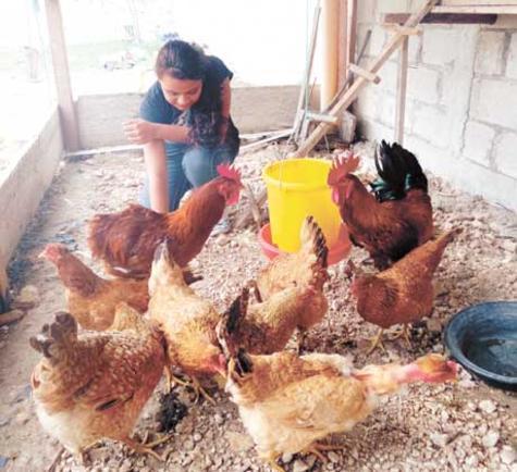 avian-flu-belize