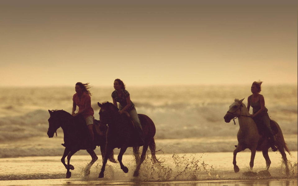 bg_horses