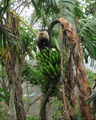 Common Misconceptions About Living And Retiring in Costa Rica