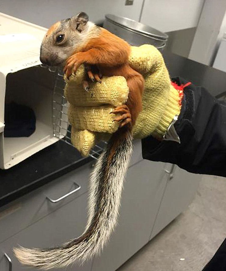 Passengers had already disembarked when the squirrel was found after a flight from Costa Rica to Houston