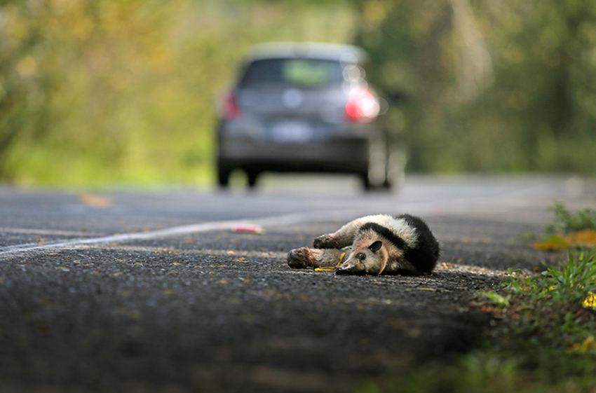 animal-crossing-signs51605