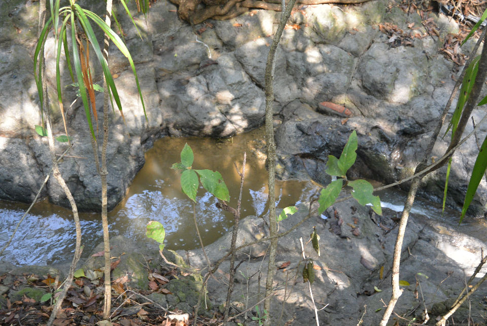 brown-water-2015-04-2951624
