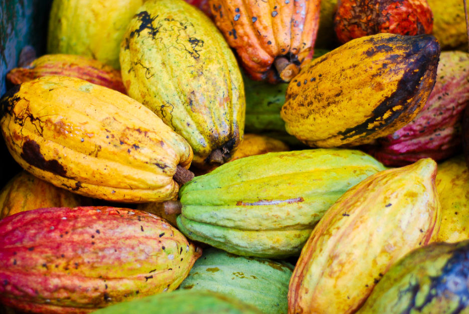 cacao-pods-940x630