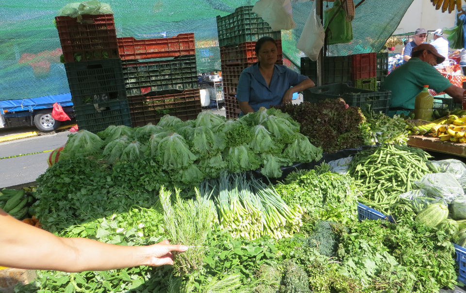 Fresh oregano, basil, parsley, chives and many other herbs are the specialty of this farm