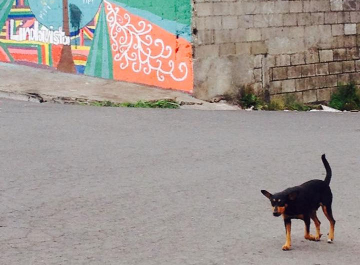 An Estimated 2 Million Stray Dogs in Costa Rica