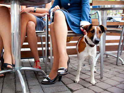 5-tips-for-dining-out-with-your-dog