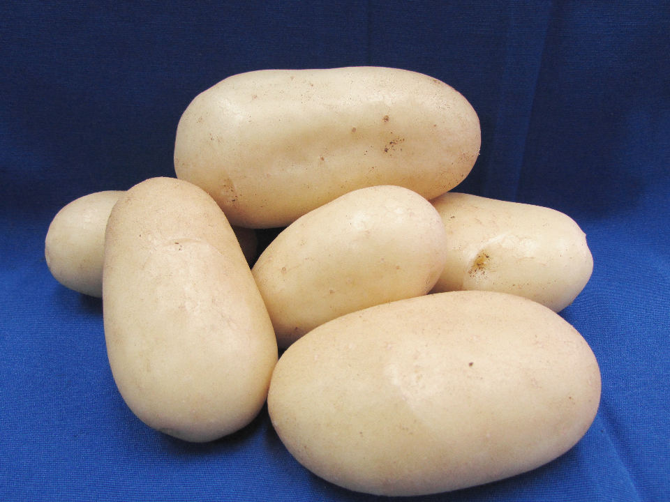 Costa Rica Has Its Own New Variety of Potato