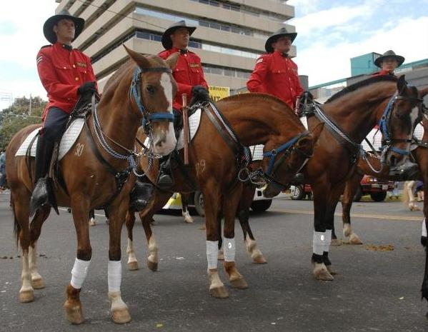 The Policia Montada in full dress uniform taking part in the tope in San Jose. Archive photo